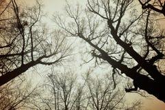 Tops de niebla del woth del fondo natural de noviembre del otoño de árboles desnudos Fotos de archivo