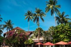 Tops de palmeras contra el cielo azul fotos de archivo libres de regalías