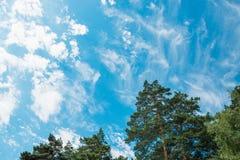 Tops de pinos y de abedules contra un cielo azul con las nubes Daylig Foto de archivo