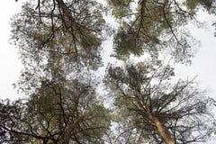 Tops del árbol fotos de archivo