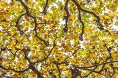 Tops del árbol Foto de archivo libre de regalías