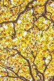 Tops del árbol Fotografía de archivo libre de regalías