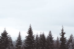 Tops del árbol Fotografía de archivo