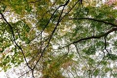 Tops del árbol Imagenes de archivo