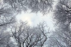 Tops del árbol con nieve Fotos de archivo libres de regalías