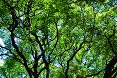 Tops del árbol en Buenos Aires Imágenes de archivo libres de regalías