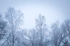 Tops del árbol en cierre para arriba Fotografía de archivo