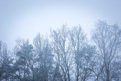 Tops del árbol en cierre para arriba Fotografía de archivo libre de regalías