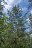 Tops del árbol en la selva imagenes de archivo