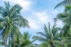 The tops of different growth trees stock photography