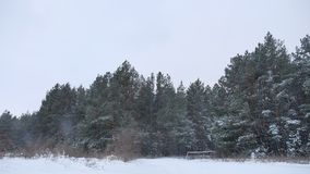 The tops of evening christmas nature tree trees in the winter snow landscape. The tops of evening christmas nature tree trees in the winter snow a landscape stock video footage