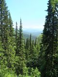Tops of fir trees, sunny weather, summer landscape, green trees, mountains in a haze, the wild nature Stock Photo