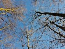 Tops fríos del árbol Fotos de archivo