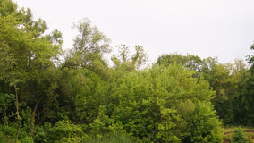 The tops of green trees by the river.  Royalty Free Stock Photography