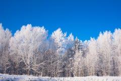 Tops helados del árbol en fondo del cielo Fotos de archivo libres de regalías