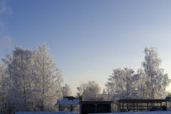 The tops of the icy trees and a fence with a gate in the morning Stock Photography