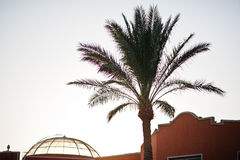 The tops of palm tree background evening sky on sunset Stock Photography