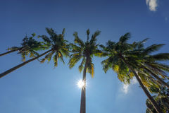 Tops of the palm trees against the blue sky Royalty Free Stock Photography