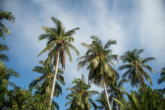 Tops of the palm trees against the blue sky with clouds Royalty Free Stock Photography