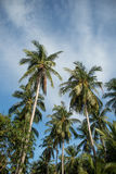 Tops of the palm trees against the blue sky with clouds Royalty Free Stock Images