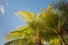 Palm trees against blue clouded sky Royalty Free Stock Photos