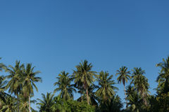 Tops of the palm trees on blue sky background Royalty Free Stock Images