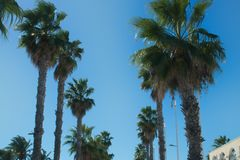 The tops of palms in two rows frame the road stock photos