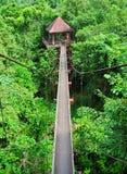 Tops tailandeses del árbol Fotografía de archivo