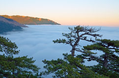 Tops of trees against clouds in mountains at sunset. Winter evening, Yalta valley in the Crimean mountains to the horizon filled with clouds and fog. The tops of stock photo