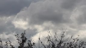 Tops of Trees Against Cumulonimbus Clouds. Tops of trees against cloudy sky stock video