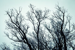 The tops of trees. Cold tone. Stock Image