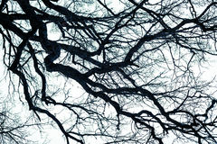 The tops of trees. Cold tone. Royalty Free Stock Photos