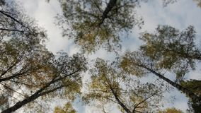 Tops of the trees covered with yellow leaves in autumn park. Camera rotates, tilt shift lens, blurry dreamy image stock video footage