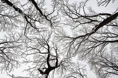 Tops of the trees in a park Stock Photos