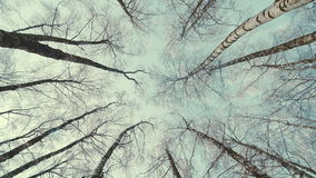Tops of the trees in winter forest. Rotation of the sky. Tops of the trees in winter forest stock footage