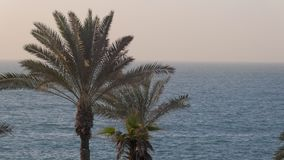 Tops of two tropical palms are in background of sea in evening stock video footage