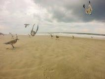 Topsail Beach North Carolina Stock Images