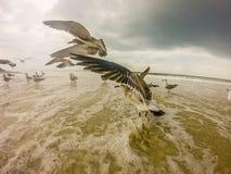 Topsail beach north carolina. Dark clouds Royalty Free Stock Image
