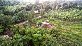 Topview одичалое Стоковое Фото