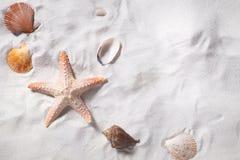 Topview av havsskal med sandstranden som bakgrund och copyspace Arkivfoto
