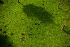 Topview av mullvadshögar i gräsmatta royaltyfri fotografi