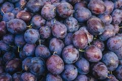 Topview background from organic Plums or damson stock images