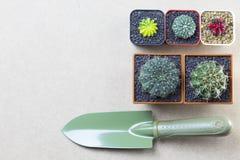 Topview del cactus e della cazzuola su fondo di legno marrone con copysp Immagine Stock Libera da Diritti