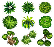 Topview of the different plants Stock Photography