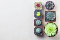 Topview e copyspace del cactus su fondo di legno marrone Fotografie Stock Libere da Diritti