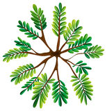 A topview of a fern plant. Illustration of a topview of a fern plant on a white background Stock Image