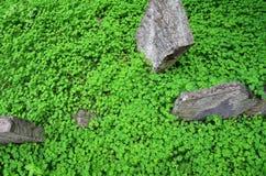 Topview koniczynowy pole z antykiem, wietrzejący kamienie zdjęcie stock
