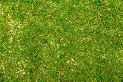 Topview, mossigt golv eller skogmossajordning, grön bakgrund Royaltyfria Bilder