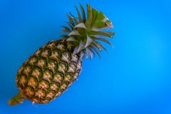 Topview of pineapple with desktop on plates blue background. top Royalty Free Stock Photos