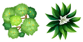 A topview of a plant. Illustration of a topview of a plant on a white background royalty free illustration